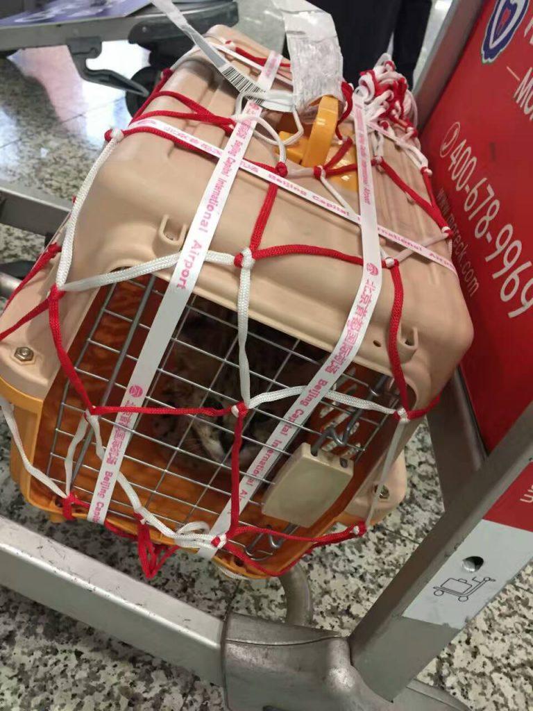 宠物去台湾